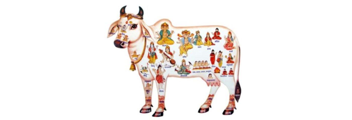 panchgavya